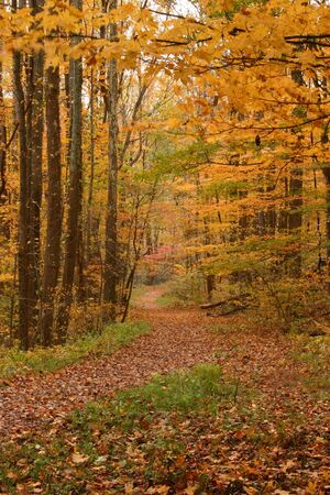 A colorful autumn trail in the Great Smoky Mountains Stock Photo