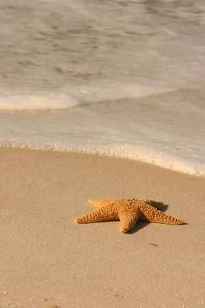 Single starfish lying on the sand with incoming surf