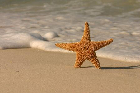 Single starfish standing in the sand with incoming surf