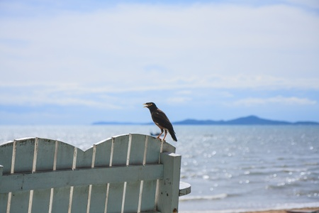 myna bird on bench by the beach photo