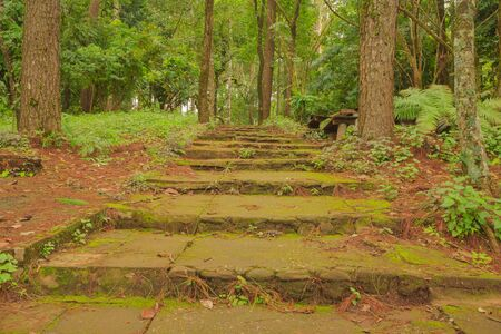looking up the stone concrete steps covered with moss in the woods photo