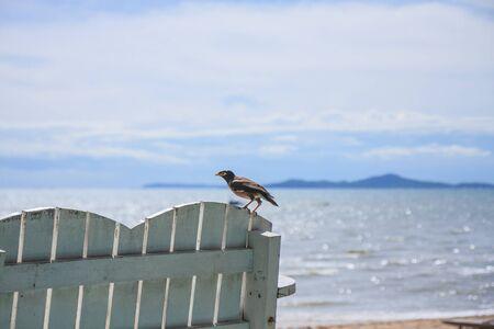 myna ptaków odpoczynku na ławce przy plaży Zdjęcie Seryjne