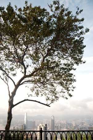 View of a tree with Hong Kong cityscapes at the background.