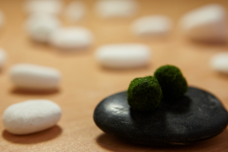 Marimo Moss Balls on spa black stones with white pebbles at background