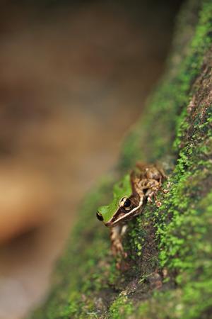Frog sitting on stone full of moss photo