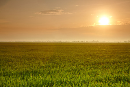 interiour: View of rice paddy field with sunrise Stock Photo