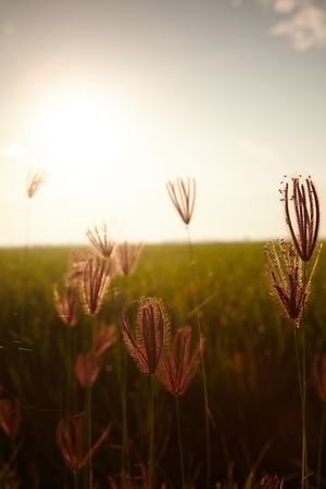 rijst: View of rice paddy field in the morning Stock Photo