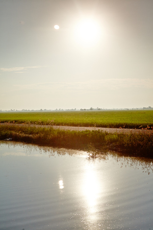 interiour shots: Sunrise at paddy field Stock Photo