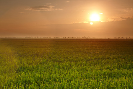 interiour shots: View of a rice paddy field Stock Photo