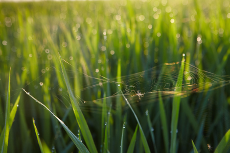 multi touch: View of a rice paddy field Stock Photo