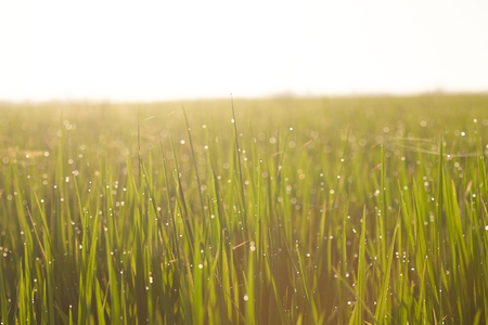 Landscape of a paddy field in the morning Stock Photo