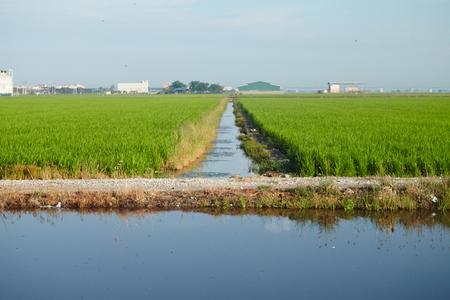 Landscape of a paddy field Stock Photo