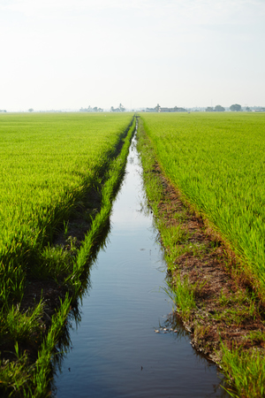 interiour: Landscape of a paddy field Stock Photo
