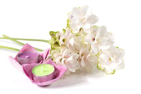 tulip: Siam tulip or Curcuma flower in Thailand on white background Stock Photo