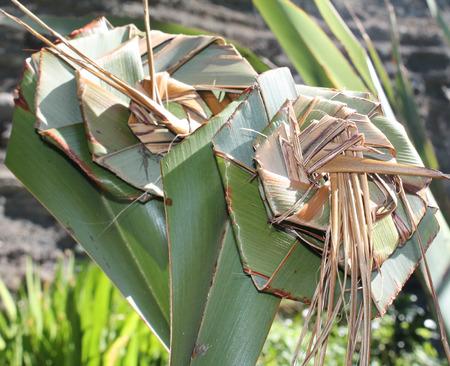 Flax Weaving 写真素材