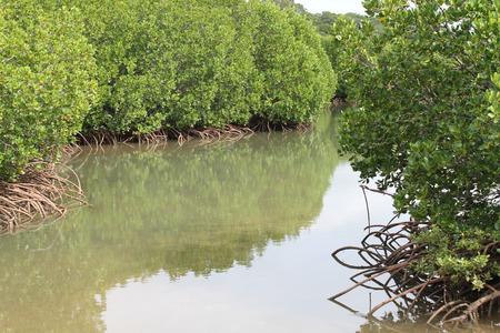 mangroves: Mangroves, New Caledonia Stock Photo