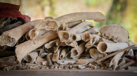 penh: Pile of bones within enclosure at the Killing Fields, Phnom Penh Stock Photo