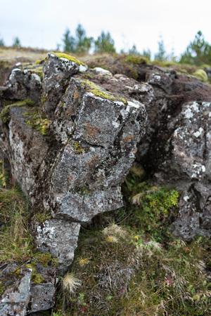 Kleine bemoste rots dichte omhooggaand