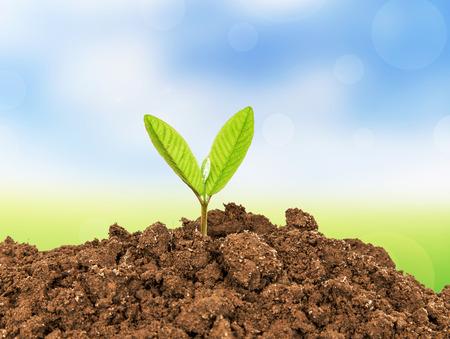 arbol de la vida: Joven planta que crece de suelo Foto de archivo