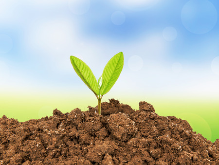 plant life: Young plant growing from soil