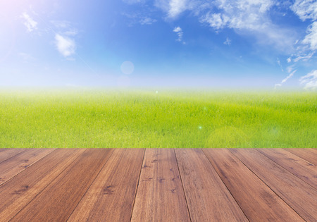 wood grass: Bright spring with nature rice field background perspective wooden plank