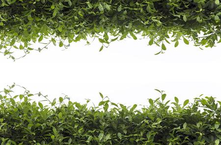 leaves frame: Marco de hojas verdes aisladas sobre fondo blanco