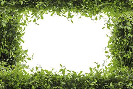 녹색 나뭇잎 프레임 흰색 배경에 고립 된