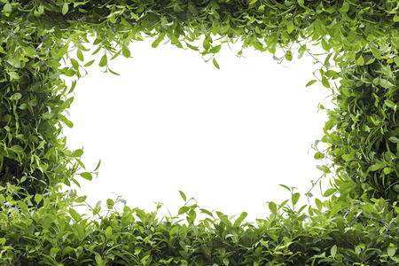 leaves frame: Green leaves frame isolated on white background Stock Photo