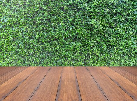 fence: Green leaves wall background and wooden floor Stock Photo