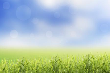 봄 또는 여름 잔디 필드와 추상적 인 성격 배경 스톡 콘텐츠