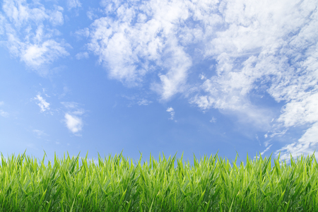 over the horizon: Green grass with blue sky background