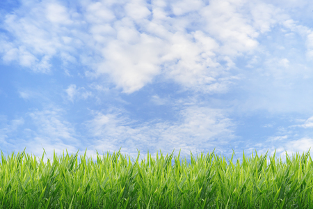 blue green background: Green grass with blue sky background