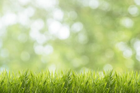 Spring or summer and abstract nature background with grass field Stock Photo