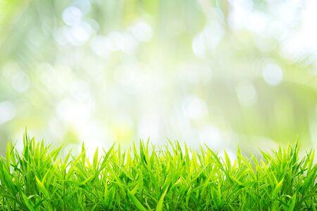Printemps ou été et champ d'herbe avec fond ensoleillé