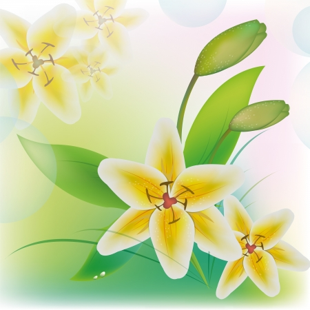 White beautiful lilies on a tender background Illustration