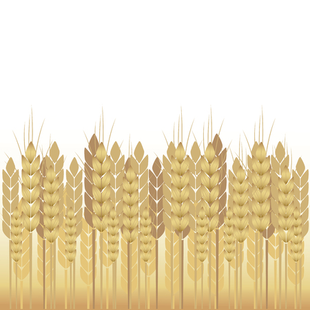 Yellow wheat on a white background Illustration