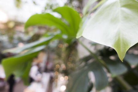 Tropical leaves. Blurred.