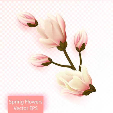 Spring flowers, magnolia isolated. Realistic gradient mesh illustration. Vector Illustration