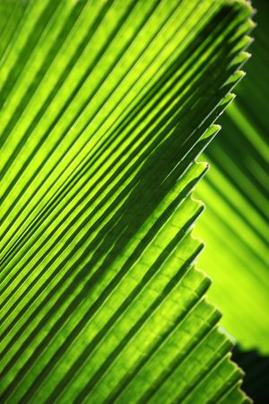 An abstract image of palm leafs  photo