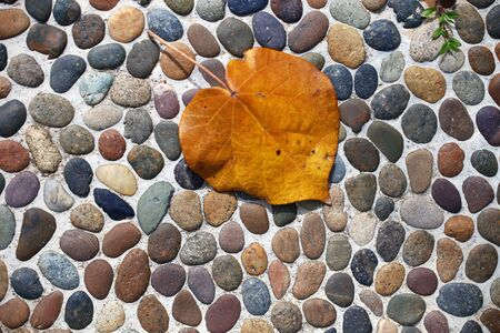 yellow leaf on the pebbles photo