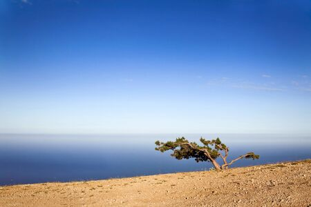 Lonely tree on a cliff Stock Photo