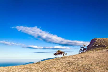 Crimea pine-tree on mountain over sea coast