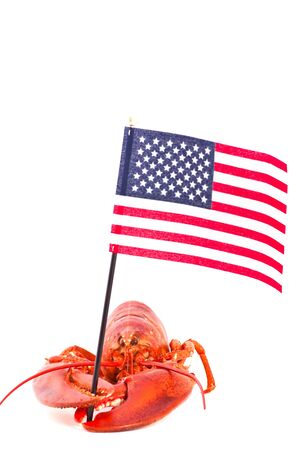 Cooked lobster is holding american flag, isolated on white