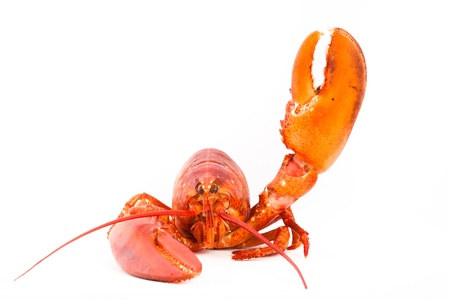 Whole lobster is saying hello with it Stock Photo