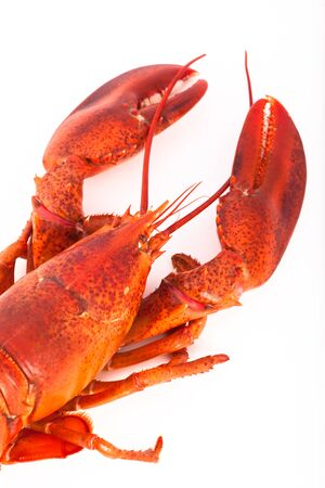Whole cooked lobster, isolated on white background Stock Photo