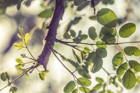 edited photo: Green Leaves in a branch with depth of field
