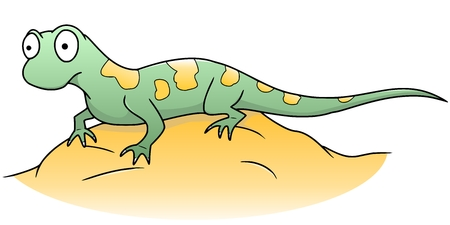 salamander: lizard Illustration
