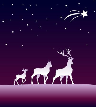 roe deer: roes under the starsky Illustration