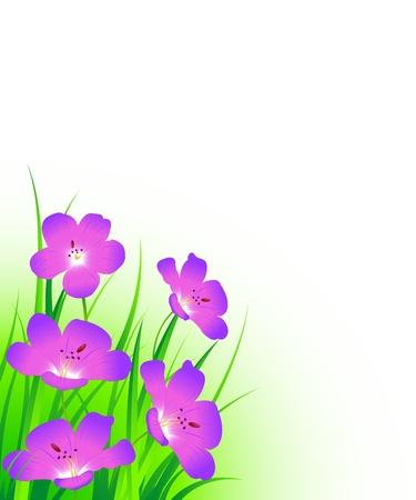 cranesbill-flowers