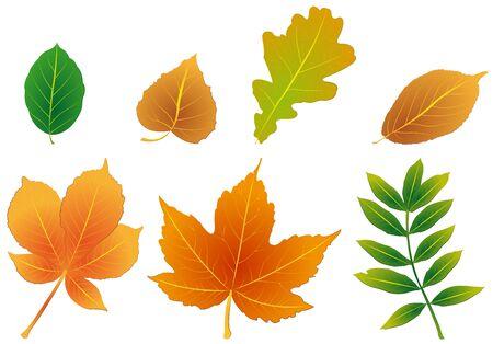 a bough: foliage